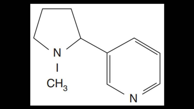 apa itu nikotin - molekul